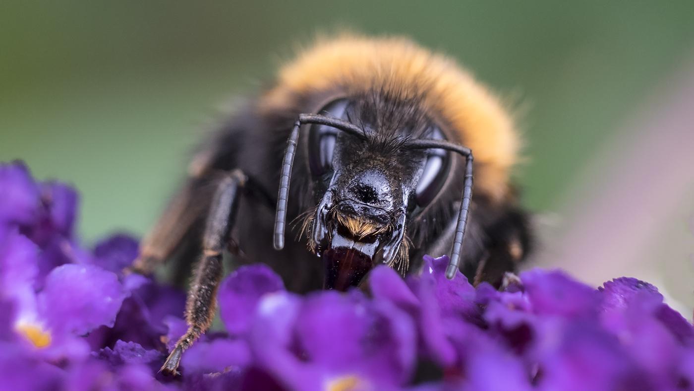 Bee.jpg.1d0e388192296b5f927fde13743d16ce