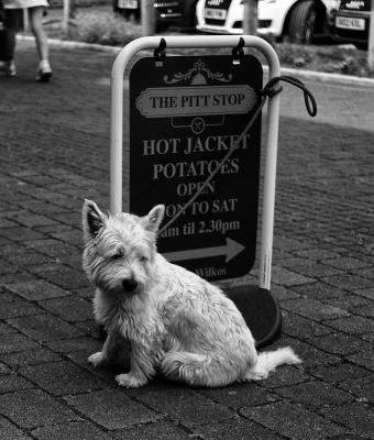 HOT POTATO DOG TIPF best mono .jpg