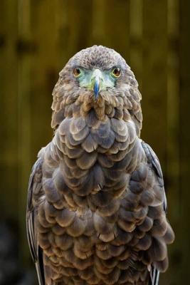 bird432A4572website.jpg