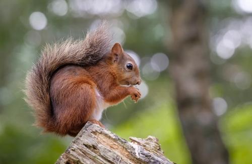 Squirrel Bokeh.jpg