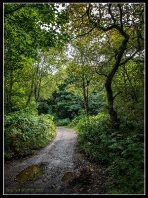 The Woods 01.jpg