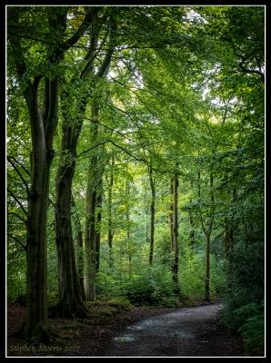 Woods 02.jpg