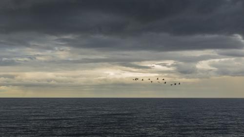 Flight of Birds.jpg