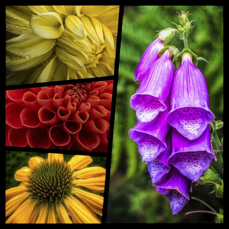 Flower Collage 900.jpg