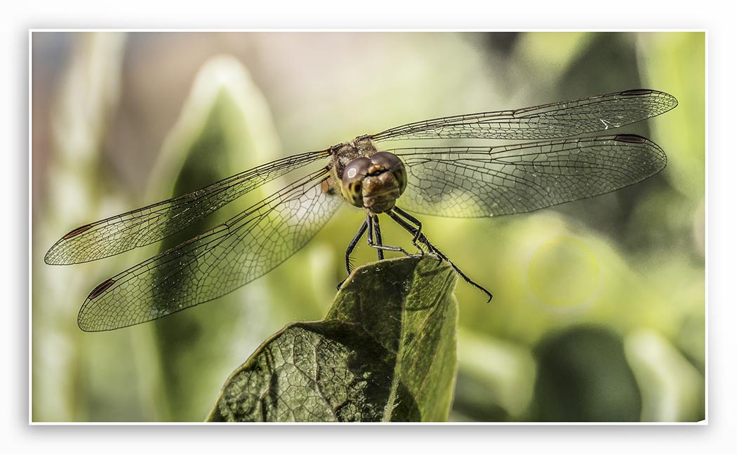 dragonfly3sl.jpg.c8cdfa743b354bde14a111268fd20fda.jpg