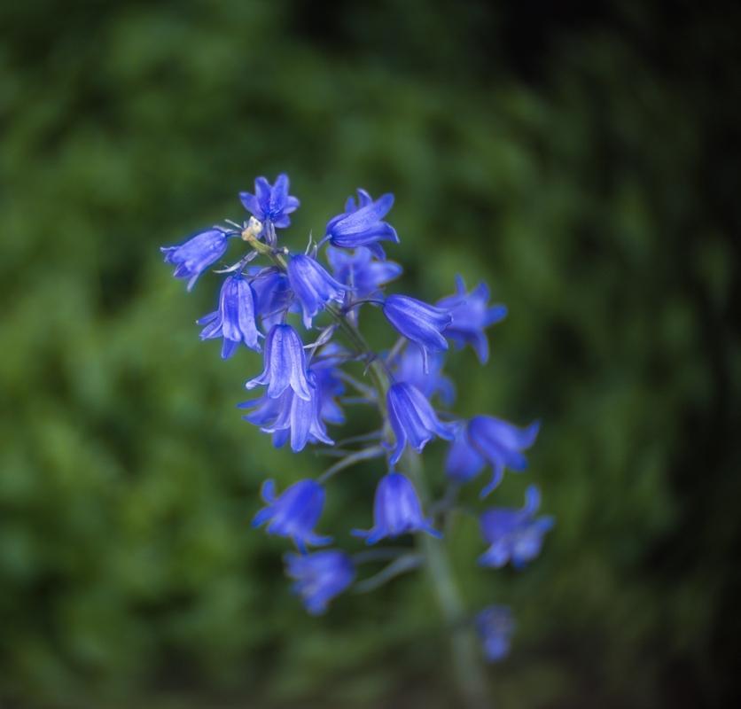 MY BLUE HEAVEN  colour.jpg