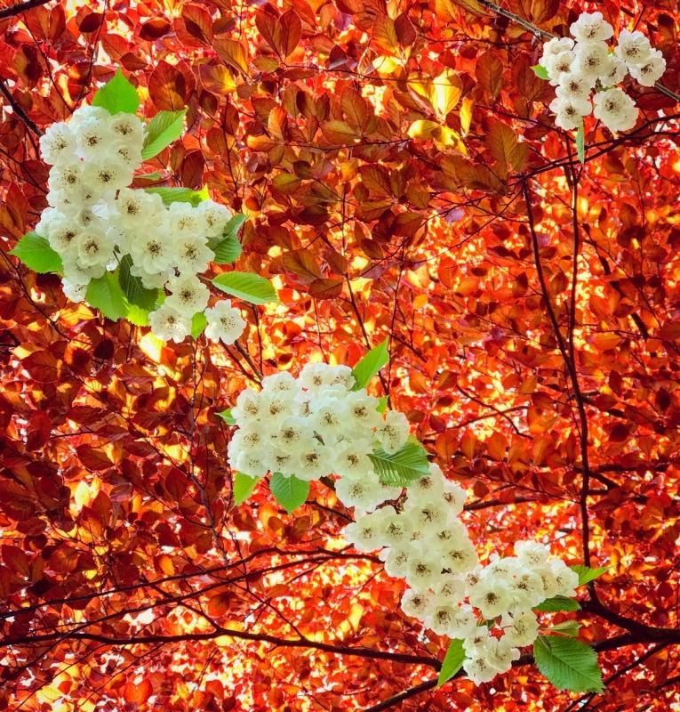 Blosson-optomised.jpg