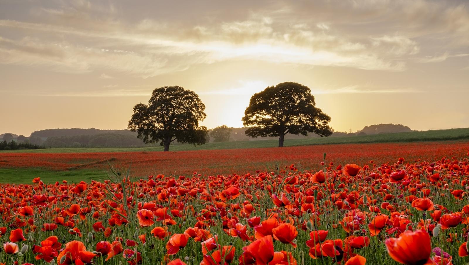 Two Poppy Trees FB.jpg