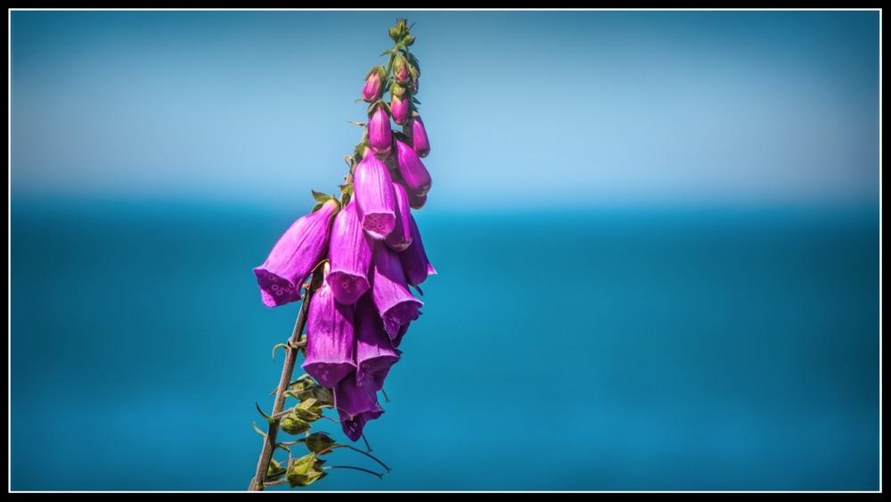 Purple Nurple #3.jpg