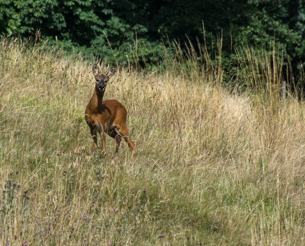 1757494154_Deer(1)(1024x827).thumb.jpg.d85b9cd80db6ae0589a4e69d7596ab73.jpg