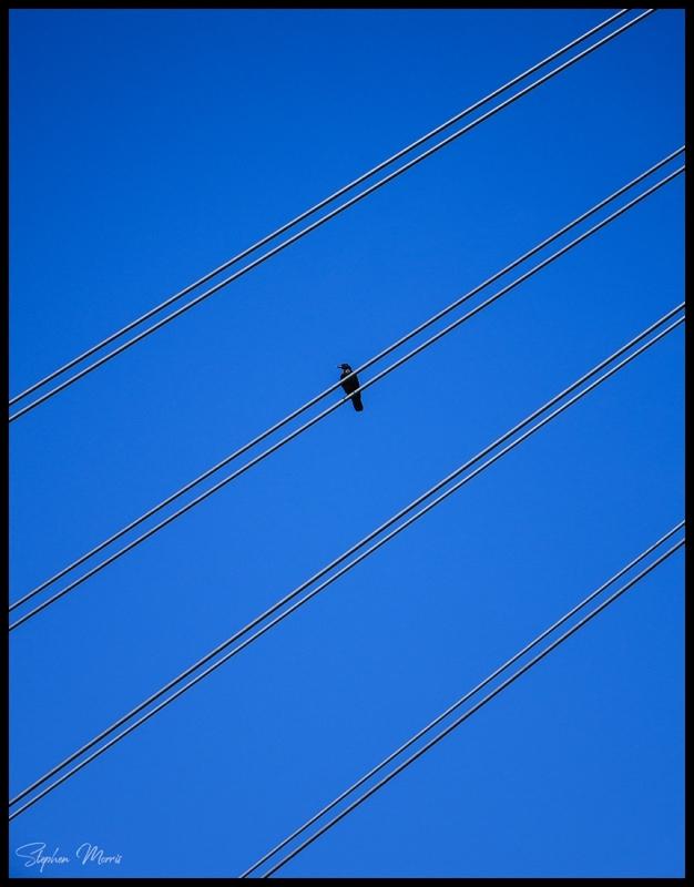 Bird on a Wire.jpg