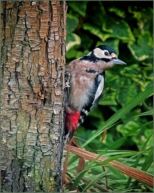 Woodpecker 3.jpg
