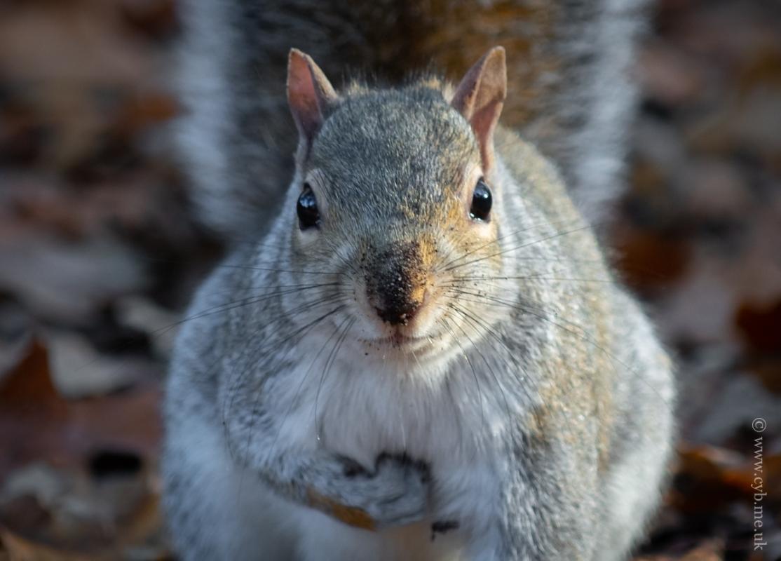 Nuts3.jpg