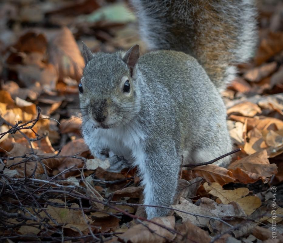 Nuts4.jpg