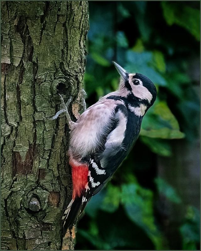 Woodpecker.thumb.jpg.b64cee95a9d1bf7e39033d77fcfc6e12.jpg