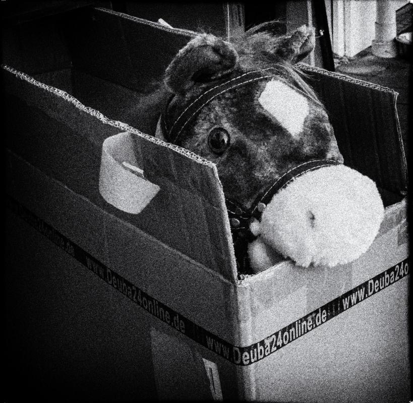 HORSE_BOX__mono_film_noir.jpg