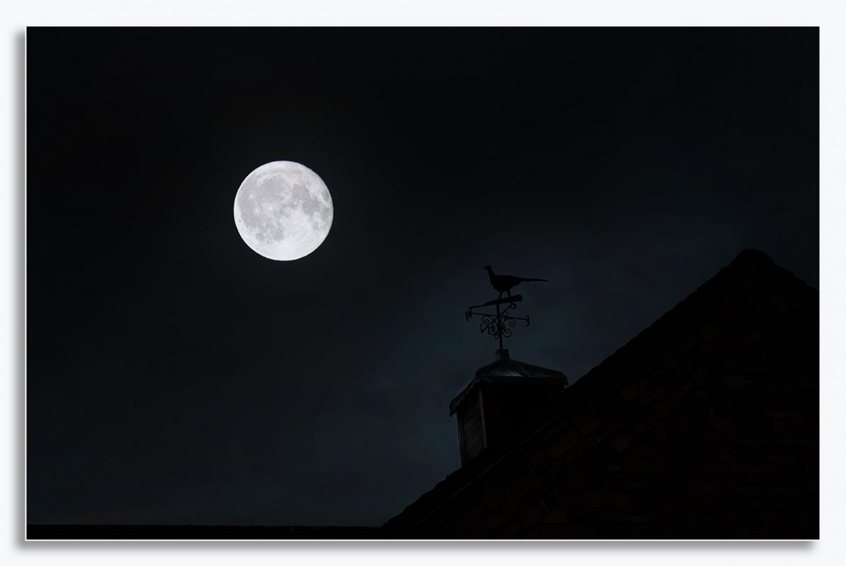 moon and pheasant2s.jpg