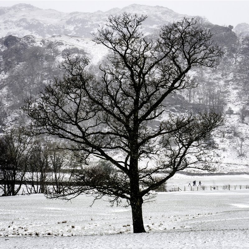 Grasmere. Snowing during Beast from the East .jpg