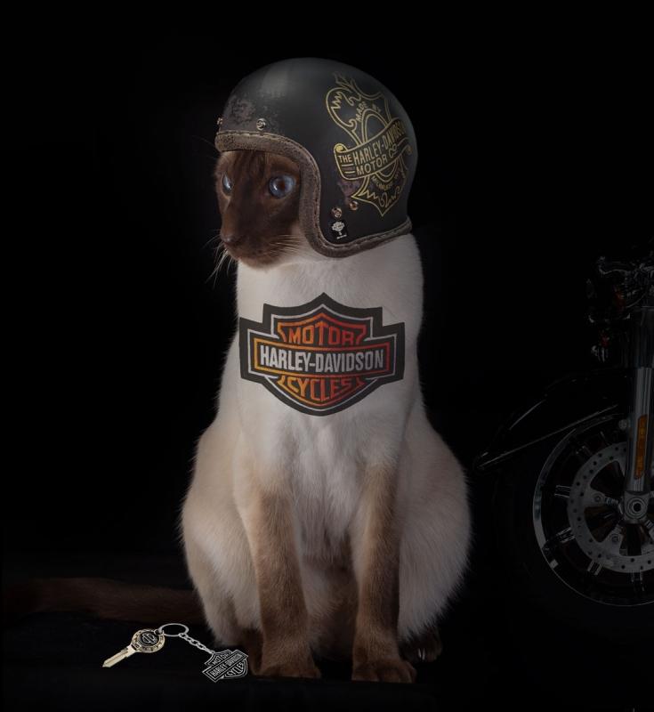 Baz-HarleyD-helmet-w.jpg