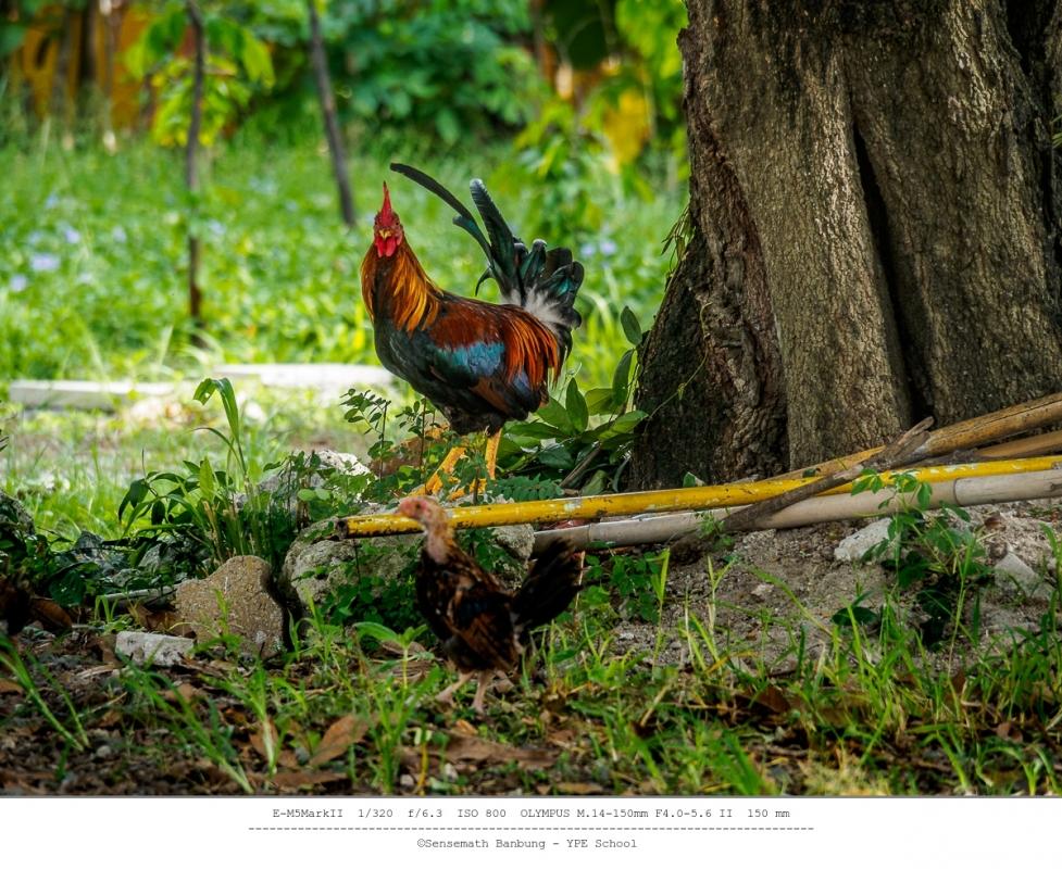 chick-family-1.thumb.jpg.bb5bc79dc7f6126981cb87645244466a.jpg