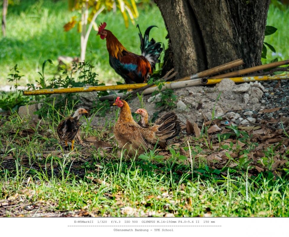 chick-family-3.thumb.jpg.963003a2cbf10c5d67271ee23432c67d.jpg