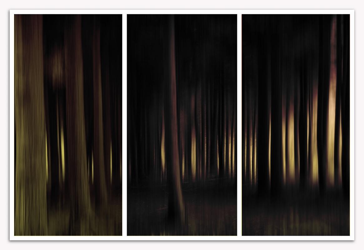 wood 4 trees ed1s.jpg
