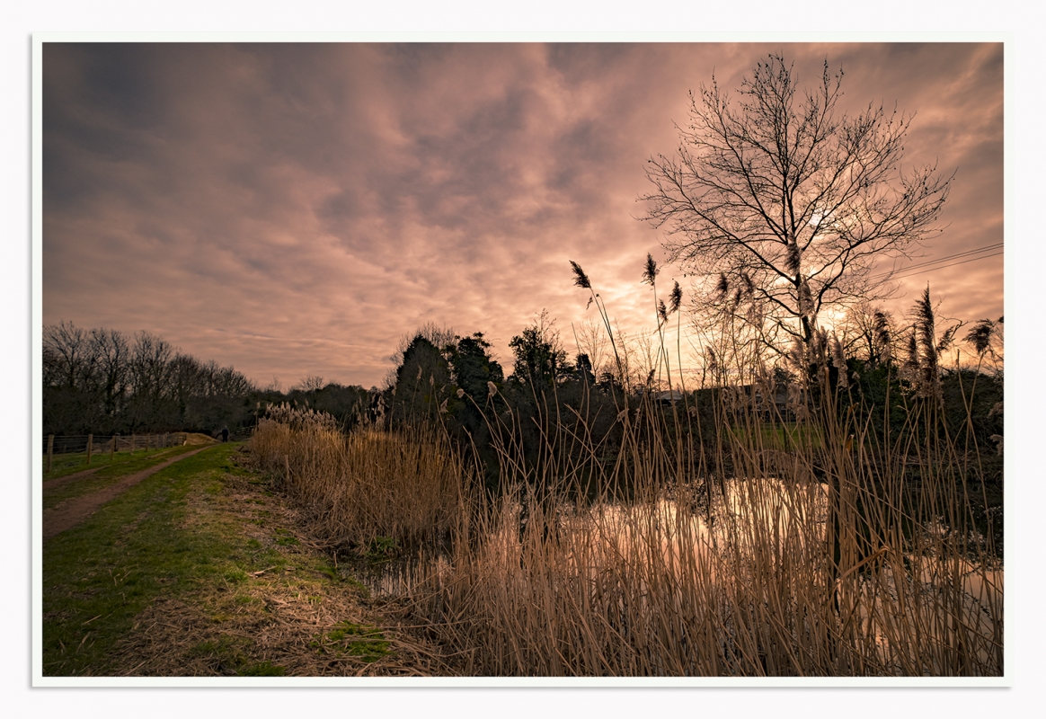 _DSF5145 reeds at  sunset ed1s.jpg