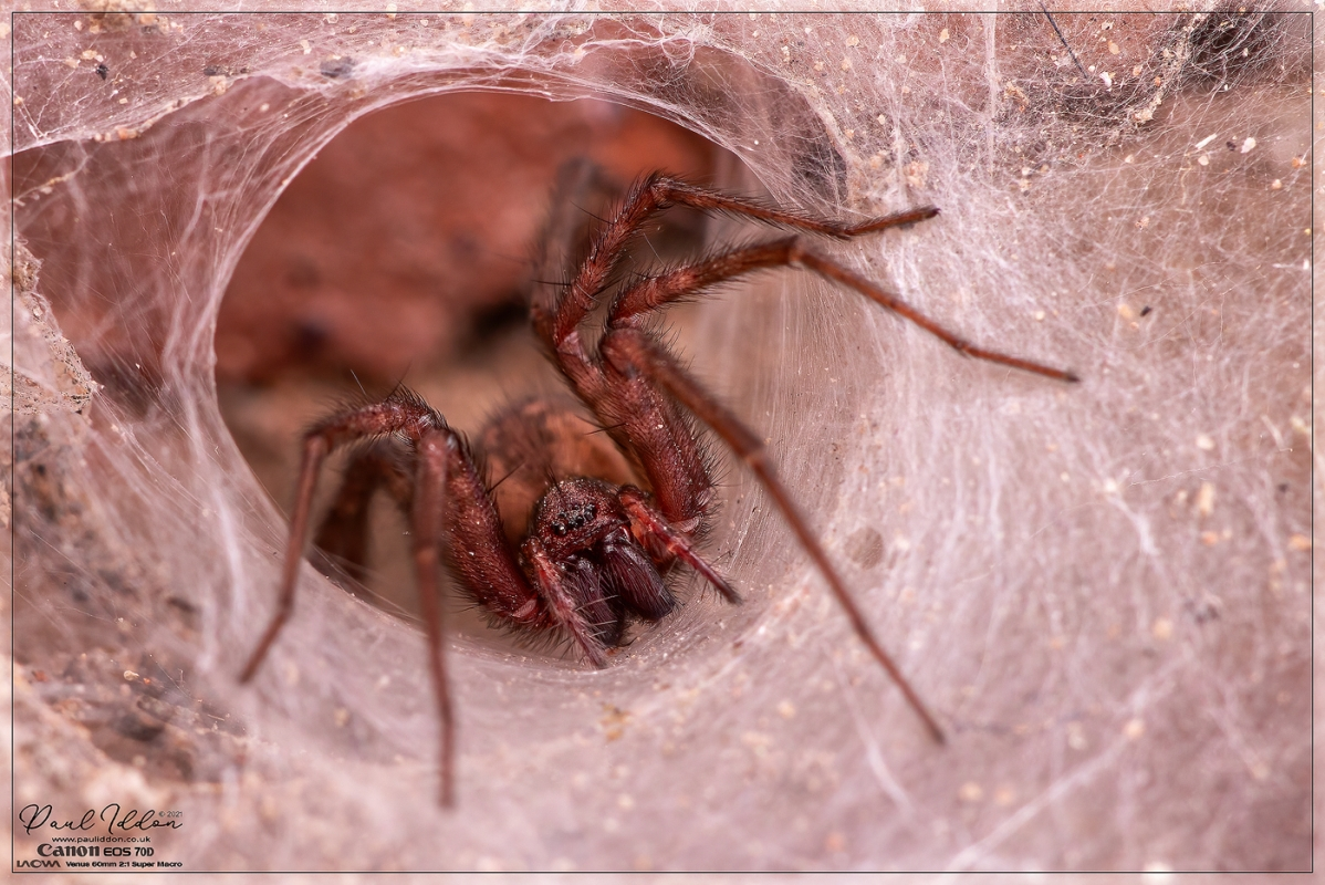 nested_spider_1400.jpg