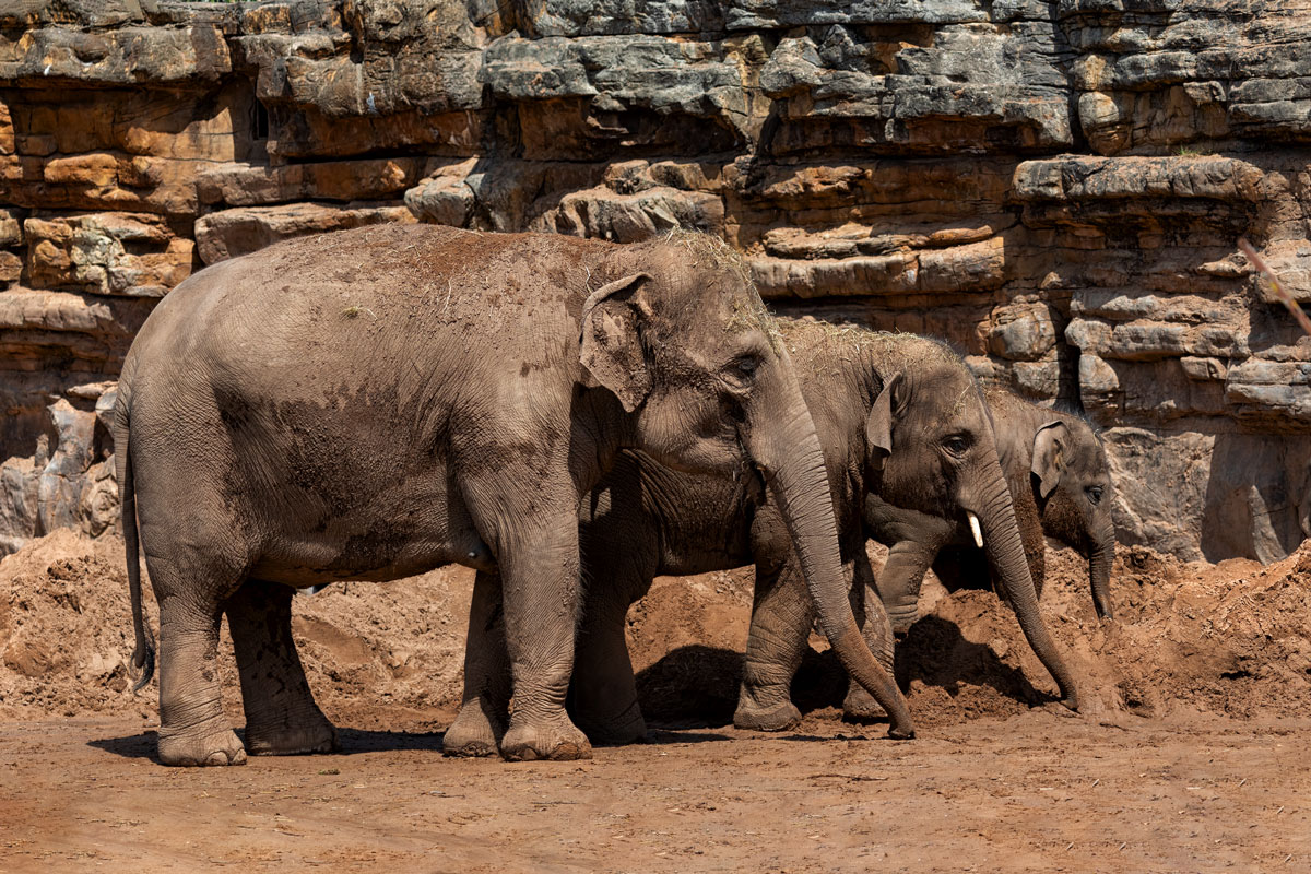 elephants8J2A0758website.jpg